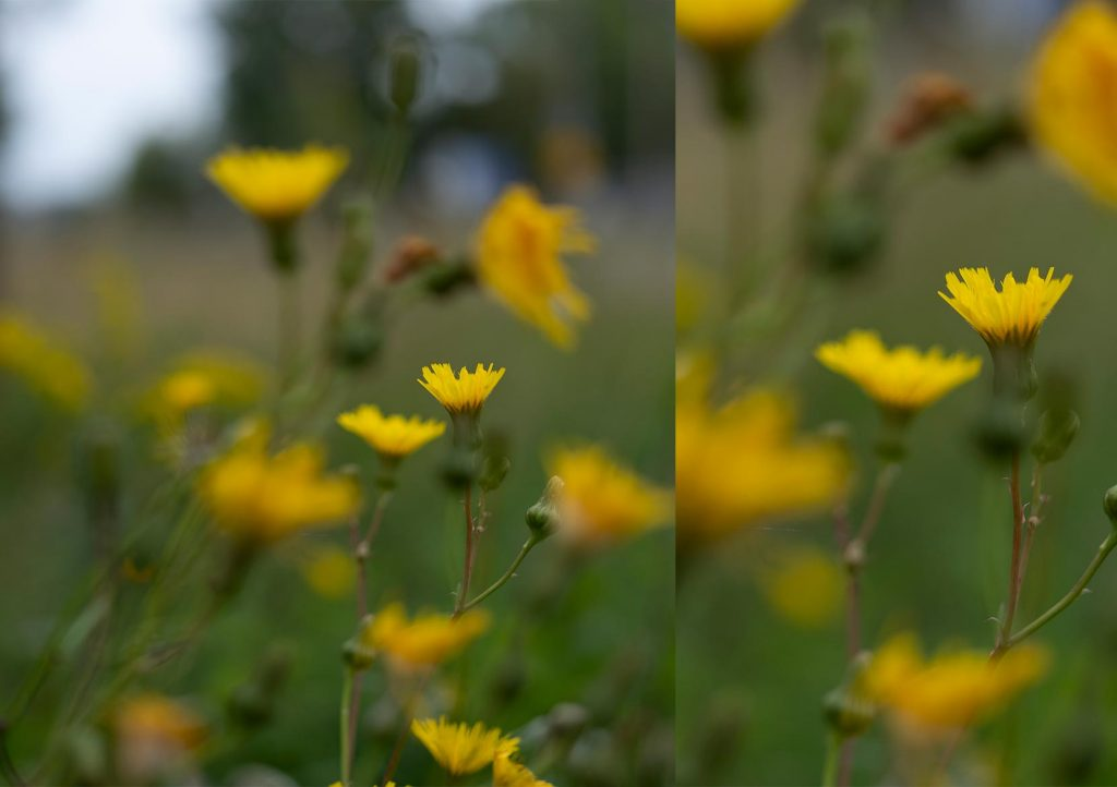 Side by side photo of flowers far away and close up