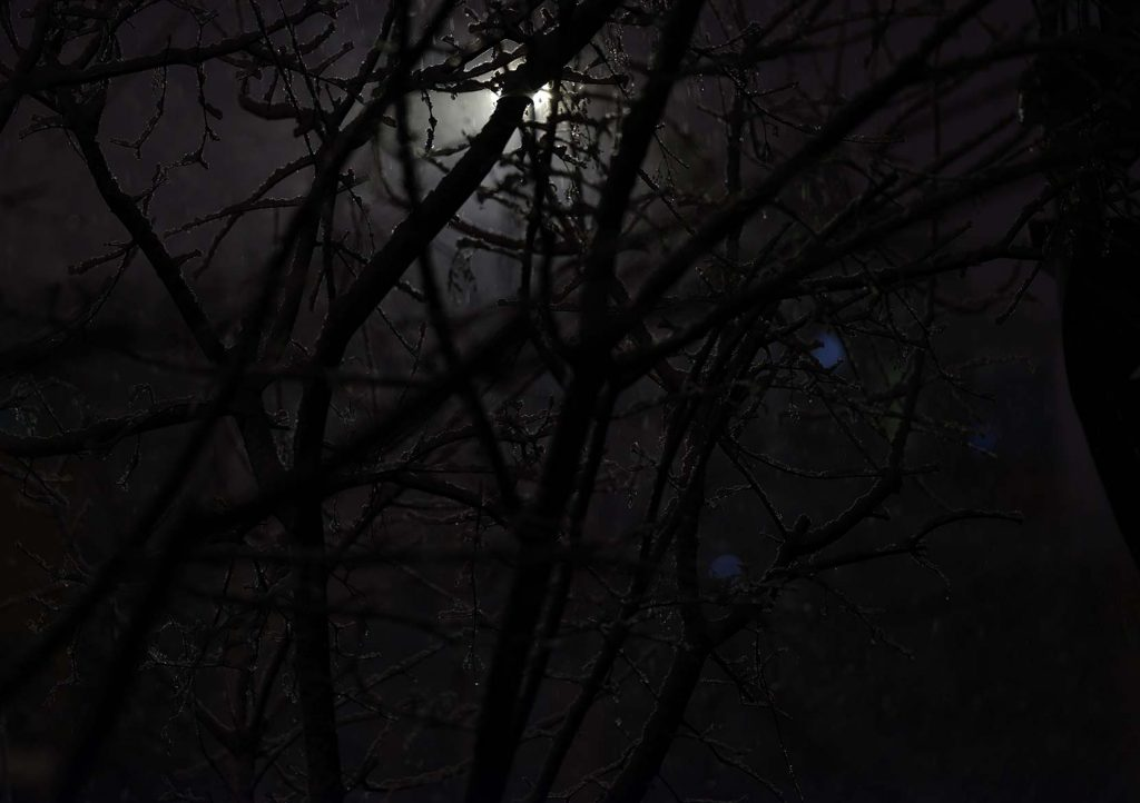 low light photo of tree branches on a winter night