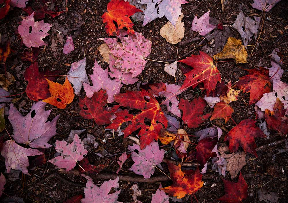 leaves lying on the ground
